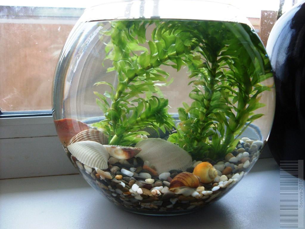 аквариум для водных улиток тебе